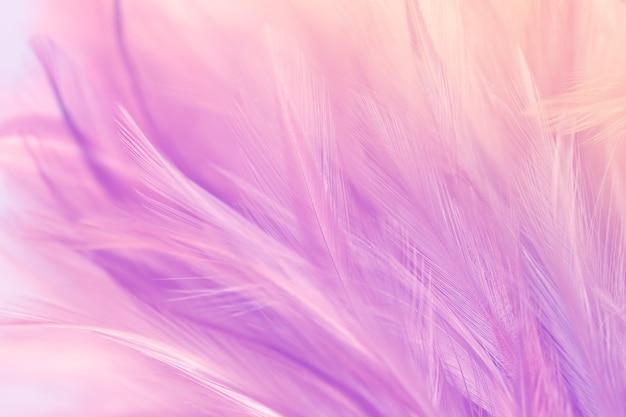 Pastelkleurige kippenveren in zachte en onscherpe stijl voor de achtergrond Premium Foto