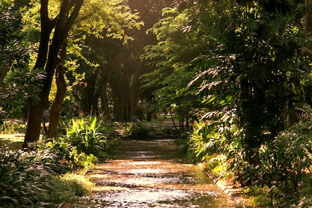 Patch door een agreen bos Gratis Foto