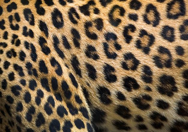 Patronen en texturen van luipaard voor achtergrond. Premium Foto