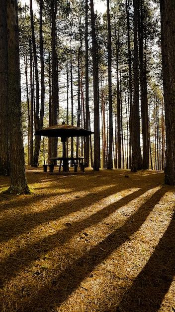 Paviljoen in een bos omgeven door hoge bomen Gratis Foto