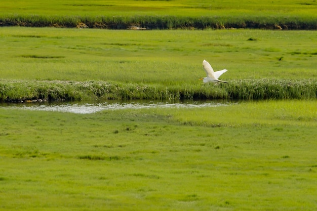 Pelikaan die over een kleine rivier in een groot groen mooi gebied vliegt Gratis Foto
