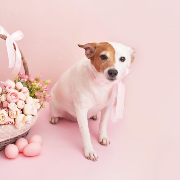 Peperkoekkoekjes, hond en eieren. Premium Foto