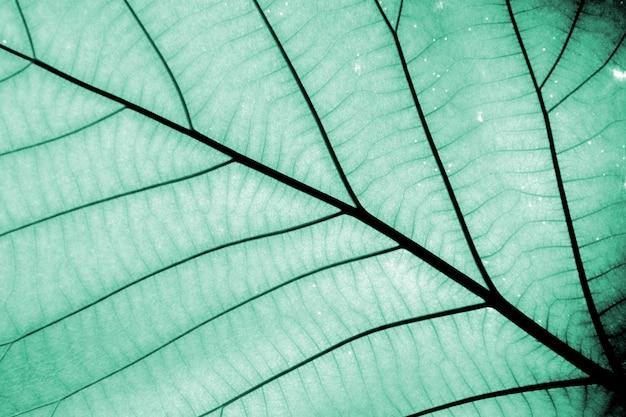 Perfecte blauwe bladpatronen - close-up Premium Foto