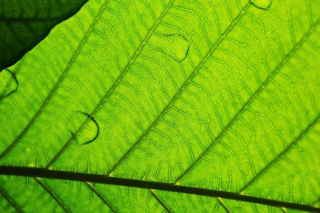 Perfecte groene bladpatronen - close-up Premium Foto