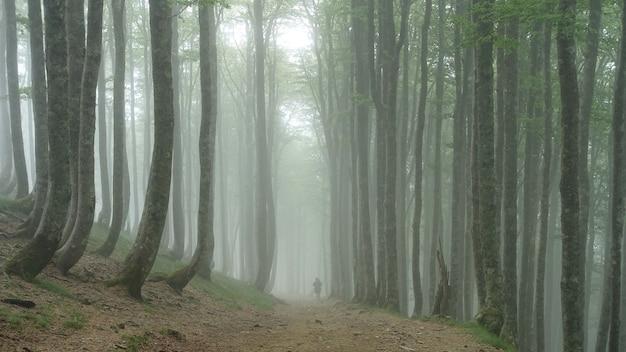 Persoon loopt door een bos bedekt met bomen en mist Gratis Foto