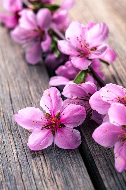 Perzik bloesem op oude houten tafel. fruit bloemen. Premium Foto