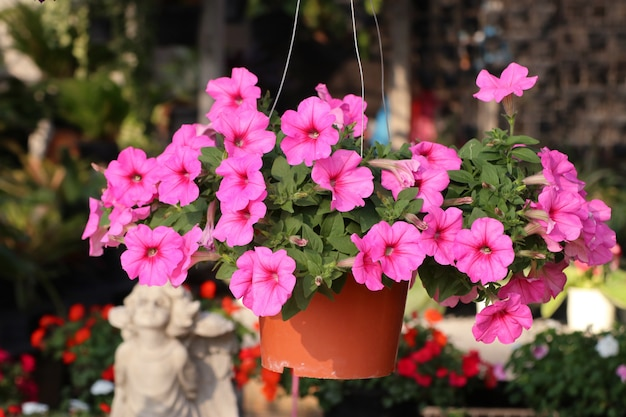 Petunia-bloemen te koop Premium Foto