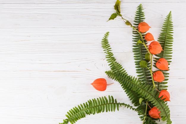 Physalis-takken met varenbladeren op witte lijst Gratis Foto