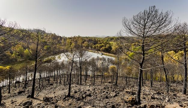 Pijnboombos gebrand door een brand met moerashoogtepunt van water en blauwe hemel op de achtergrond Premium Foto