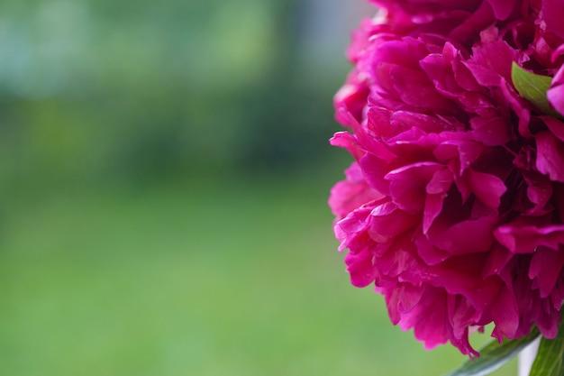 Pioenbloemen op groene aardachtergrond Premium Foto