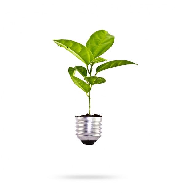 Plant groeit in een bol Gratis Foto