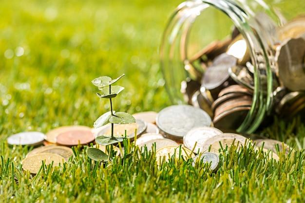 Plant groeit in munten glazen pot voor geld op groen gras Gratis Foto