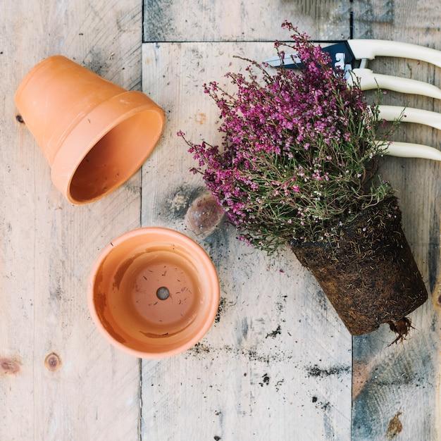 Plant in de buurt van lege potten en gereedschappen Gratis Foto
