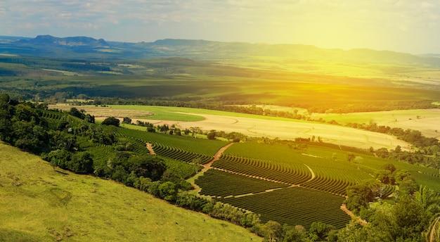 Plantage - zonlicht op het landschap van de koffieplantage - brazilië Premium Foto