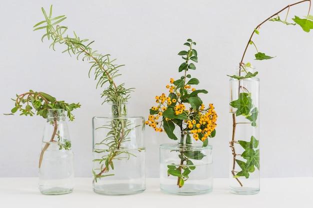 Planten in transparante vaas op bureau tegen witte achtergrond Gratis Foto