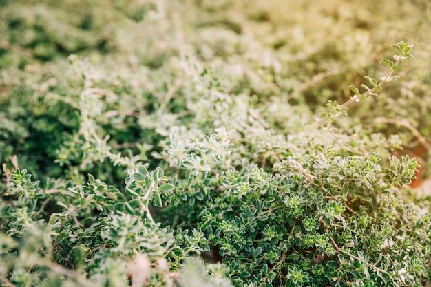 Planten met kleine groene bladeren in de tuin Gratis Foto