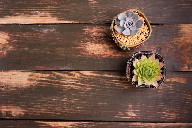 Planten op houten tafel met kopie ruimte Gratis Foto