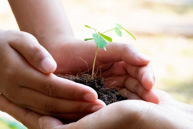Planten van planten en grond in handen houden. boom groeit en voorkomt door de mens. Premium Foto
