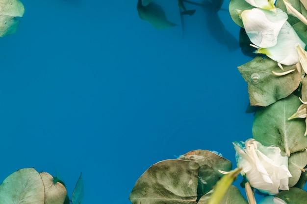 Plat lag bloemblaadjes en bladeren in water met kopie ruimte Gratis Foto