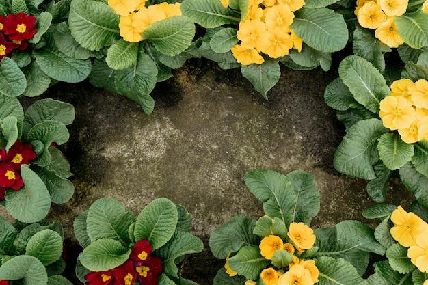 Plat lag frame met bloemen en stucwerk achtergrond Gratis Foto
