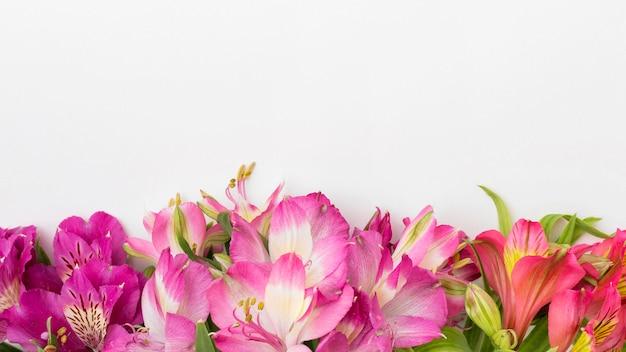Plat lag kleurrijke alstroemeria's met kopie-ruimte Gratis Foto