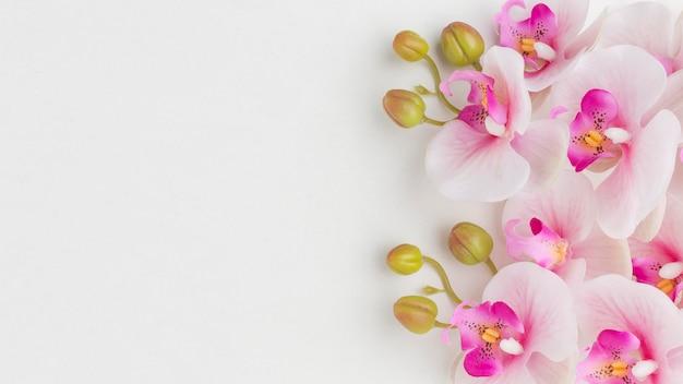 Plat lag orchideeën met kopie-ruimte Gratis Foto