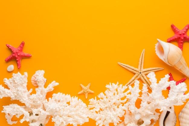 Plat lag wit koraal en schelpen met kopie ruimte Gratis Foto