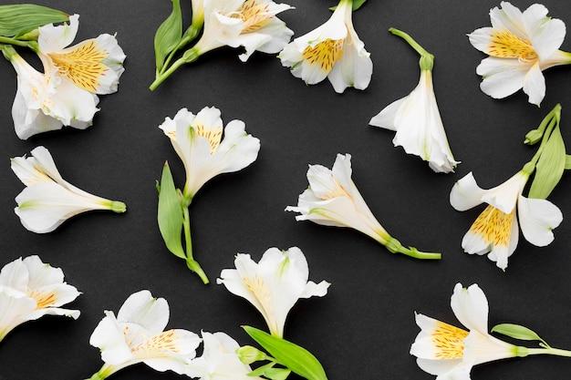 Plat lag witte alstroemeria boeketten arrangement Gratis Foto
