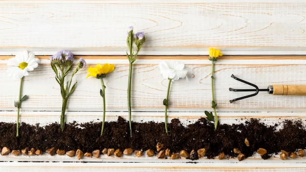Plat leggen bloemen planten Gratis Foto