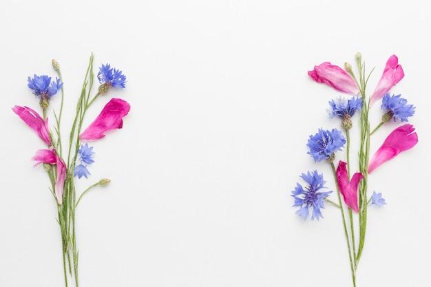 Plat leggen korenbloemen en roze bloemblaadjes Gratis Foto