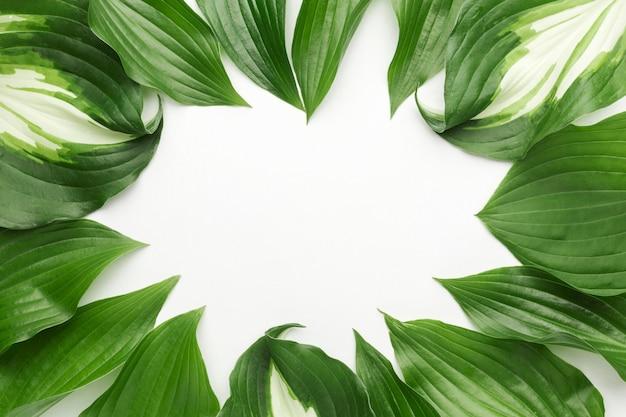 Plat leggen van bladeren frame concept met kopie ruimte Gratis Foto