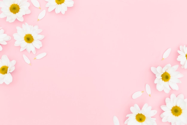 Plat leggen van daisy met kopie ruimte Gratis Foto