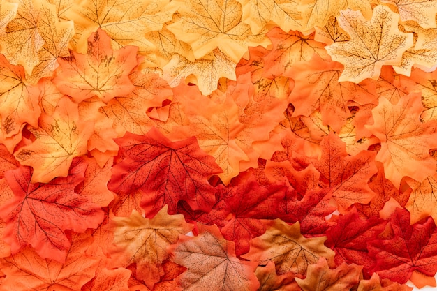 Plat leggen van de herfst bladeren oppervlak Gratis Foto