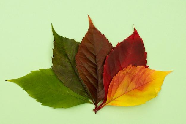 Plat leggen van gekleurde herfstbladeren Gratis Foto