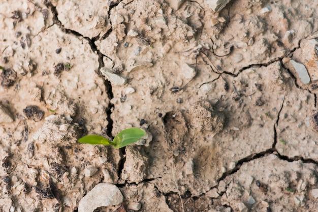 Plat leggen van grond met scheuren Gratis Foto