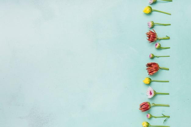 Plat leggen van lente madeliefjes en rozen met kopie ruimte Gratis Foto