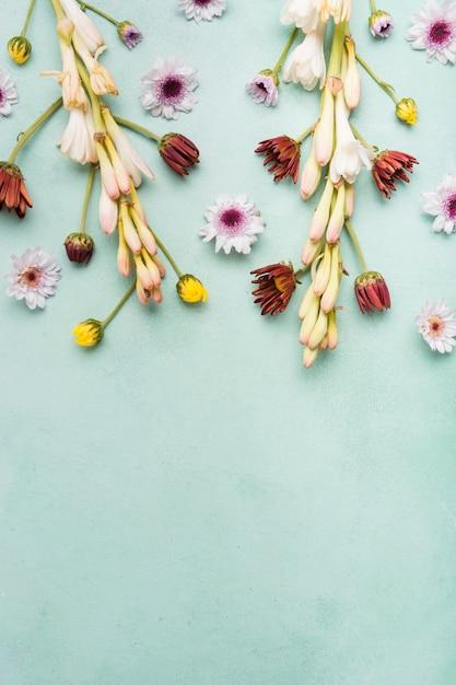 Plat leggen van lente-orchideeën en madeliefjes met kopie ruimte Gratis Foto