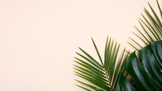 Plat leggen van monstera en andere bladeren met kopie ruimte Gratis Foto