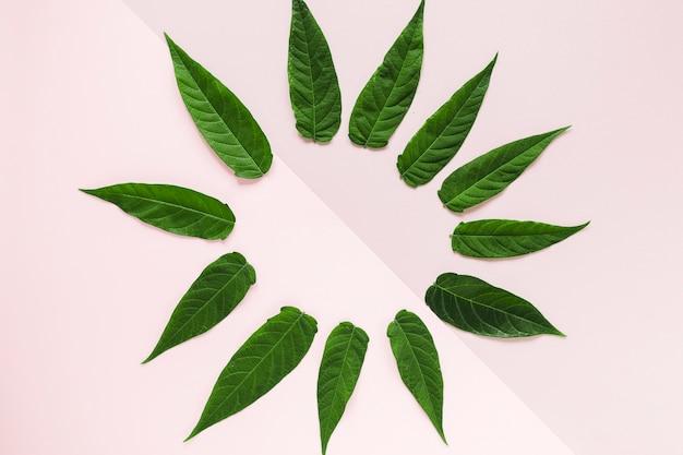 Plat leggen van tropische bladeren met copyspace Gratis Foto