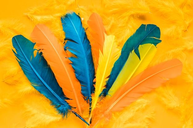 Plat van veelkleurige veren voor carnaval Gratis Foto