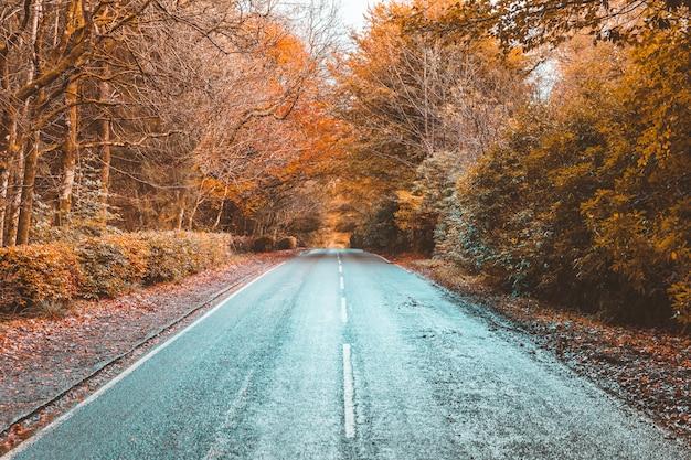 Plattelandsweg door het hout in de herfst Premium Foto