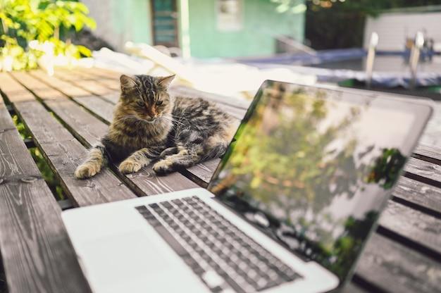 Pluizig straatkat zittend op een houten bankje naast laptopcomputer met boom reflecties buiten in zomertuin. remote online werk concept Premium Foto