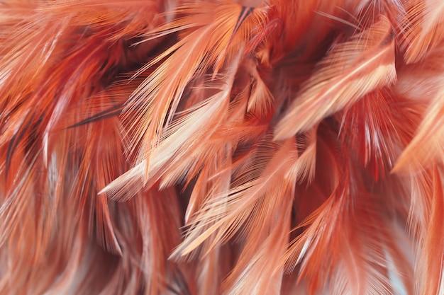 Pluizig van kippenveren in zachte en onduidelijk beeldstijl, abstracte kunst Premium Foto
