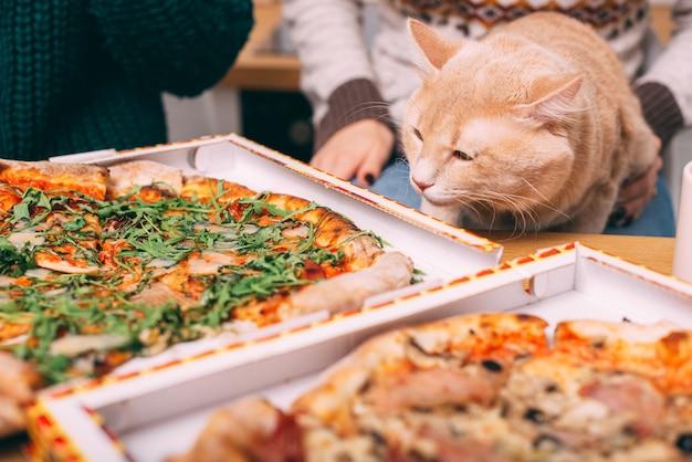 Pluizige grote kat zittend aan tafel voor twee pizza's, fastfood pizzabezorging Premium Foto