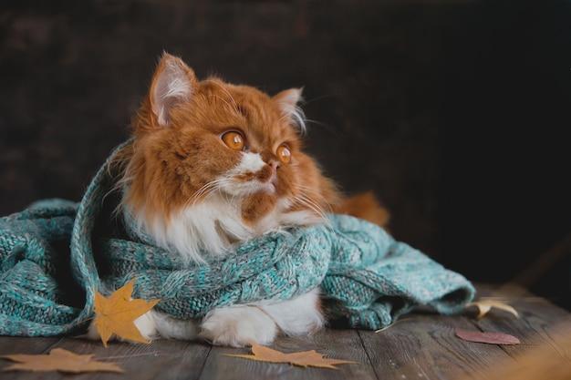 Pluizige kat zit op een houten tafel, omringd door droge herfstbladeren. Premium Foto