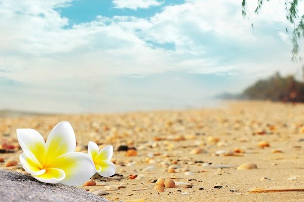 Plumeria-bloemen op het strand staan in de zomer vol met schelpen. Premium Foto