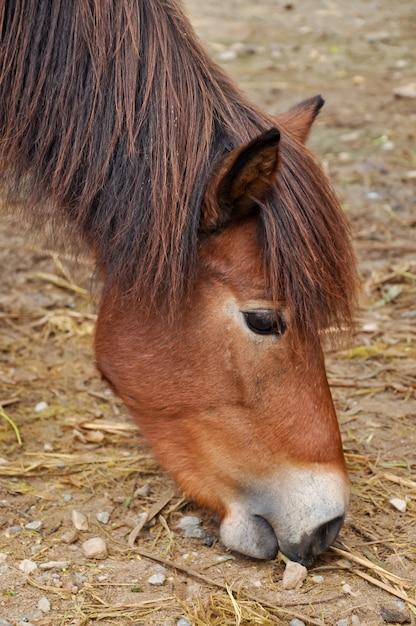 Pony Premium Foto