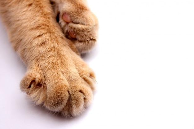 Poot van een rode kat met klauwenclose-up op een witte achtergrond. Premium Foto