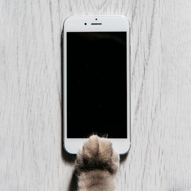 Poot van kat met mobiele telefoon Gratis Foto
