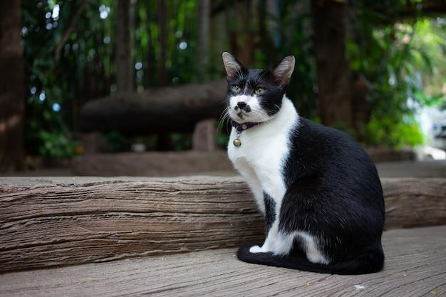 Portret schattige kat zit voor het huis is een schattig huisdier en goede gewoonten Premium Foto